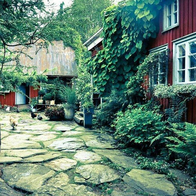 Godmorgon på er!! Nu för tiden är jag ledig varje helg & ni fattar inte vilken lyx det är!! Så nu upp & hoppa & äta långfrukost....☕ Hittade en riktigt grön bild från i somras! Så den får det bli i brist på spirande vårbilder... Ha en go dag!!  #trädgård #garden #have #hage #garten #tuin #jardin #innergård #faluröd #pipranka #odla #gardening #scandinaviangarden #scandinavianhome #giardino