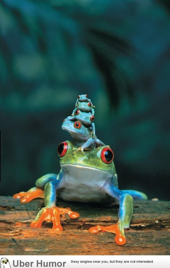 Cute Frog Porn - Red-eyed Tree Frog and her babies