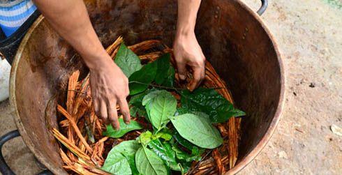 7 day ayahuasca retreat in Peru ( Kapitari)