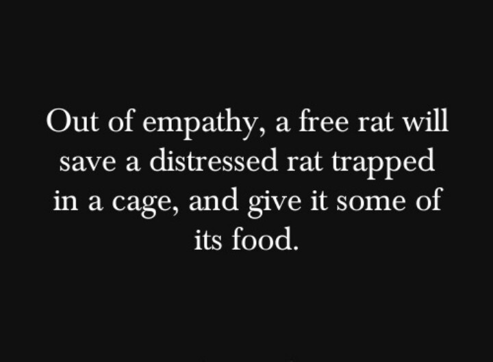 Empathetic rats. I know humans who wouldn't even do this...
