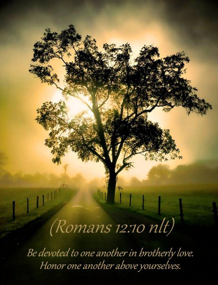Romans 1210 nlt  Bible Scripture Pictures  Life Quotes