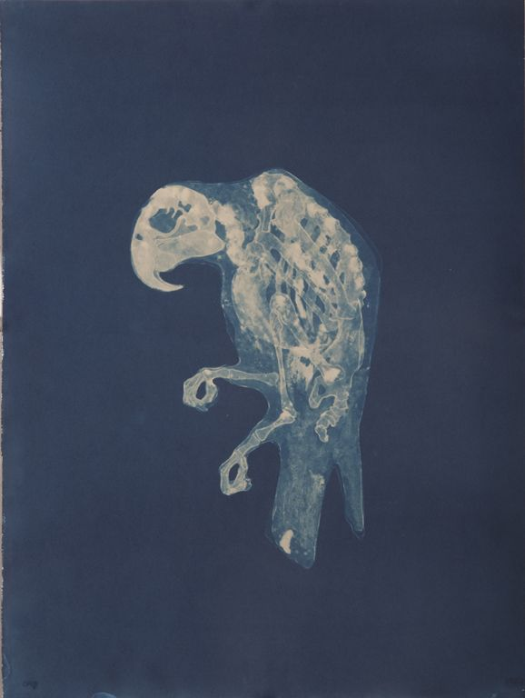 Carrie Witherell; cyanotype; relics - inspiration. seeing things in a new light with xray imaging