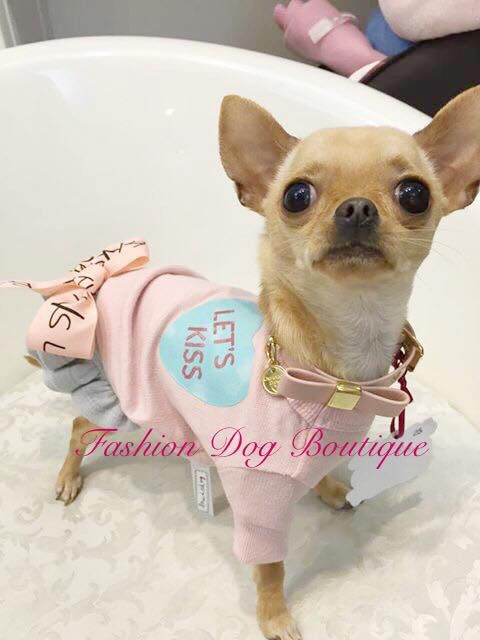❤️❤️️Dolcissima notte da Chanel❤️❤️ #fashiondogboutique #fashion #rivoli #cutie #cuccioli #chihuahua #clubchihuahua #chihuahuafashion #life #love #instadog #instalife #instalove #moda #dogs #pets #puppy #style #sweetie #shopping #kiss #night #goodnight #goodevening #kiss #petlove