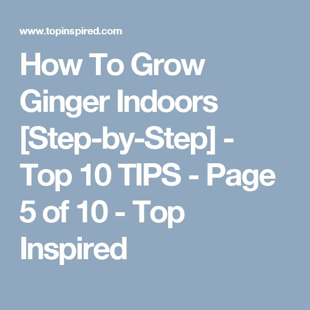 How To Grow Ginger Indoors [Step-by-Step] - Top 10 TIPS - Page 5 of 10 - Top Inspired