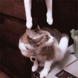 Gatorama vol. 62 - Las mejores fotos de gatos de la semana | La Loca de los Gatos
