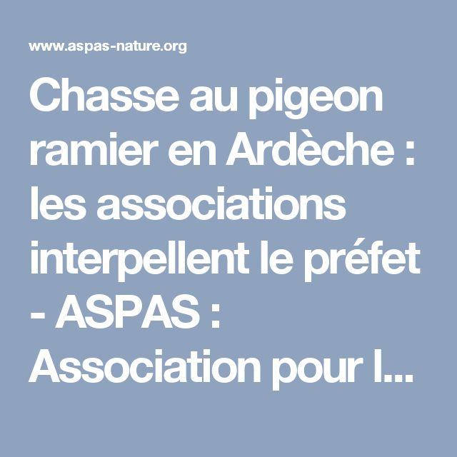 Chasse au pigeon ramier en Ardèche : les associations interpellent le préfet - ASPAS : Association pour la Protection des Animaux Sauvages