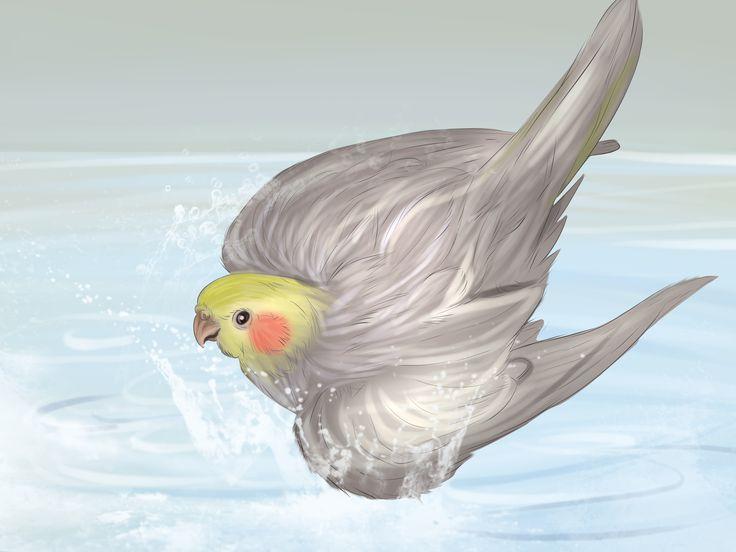 Korely jsou skvělí domácí mazlíčci. Jsou druhým nejoblíbenějším ptákem chovaným doma, a to z dobrého důvodu. Korely se dožívají více jak 15 let, jsou velmi přítulné a mívají báječnou povahu. Korely jsou společenští ptáci, kteří vám budou rá...