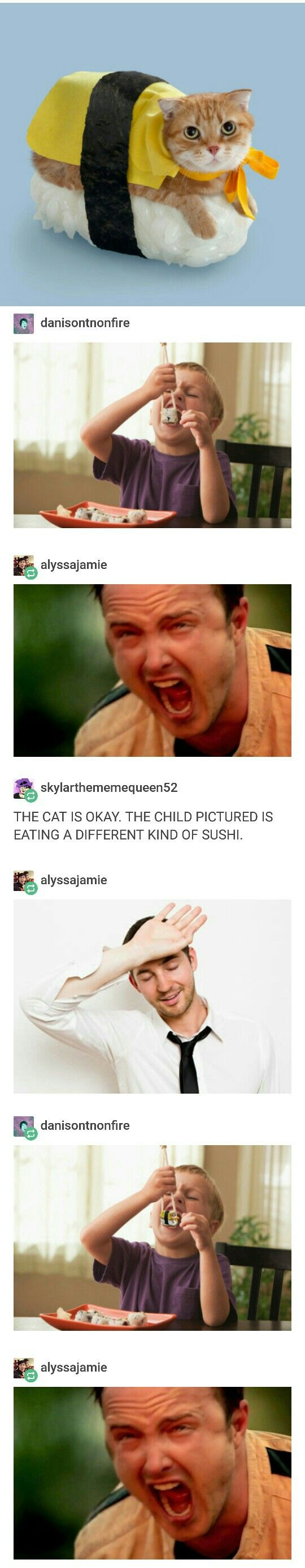 NO DON'T EAT THE CAT