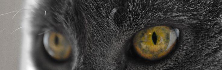 Those cat eyes.