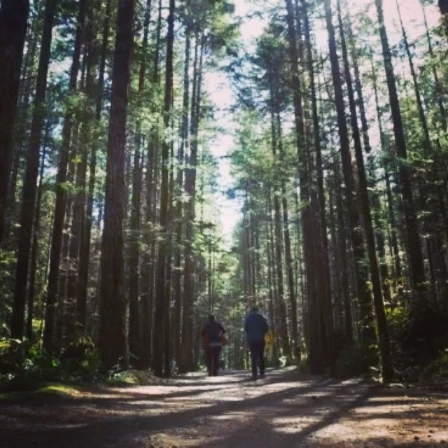 A walk through the woods with our new DJI Osmo. #DJI #explorebc #comoxvalley