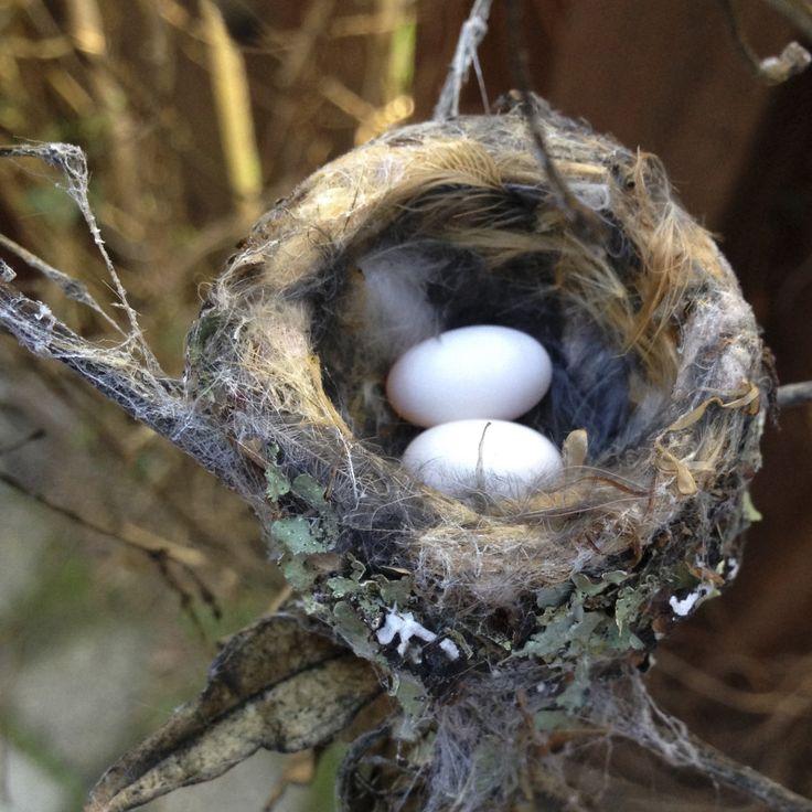 zXtv6Bk - Hummingbird's nest