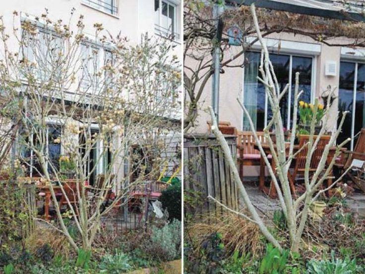 die 25 besten ideen zu hibiskus schneiden auf pinterest hibiskus pflanzen hibiskusgarten und. Black Bedroom Furniture Sets. Home Design Ideas
