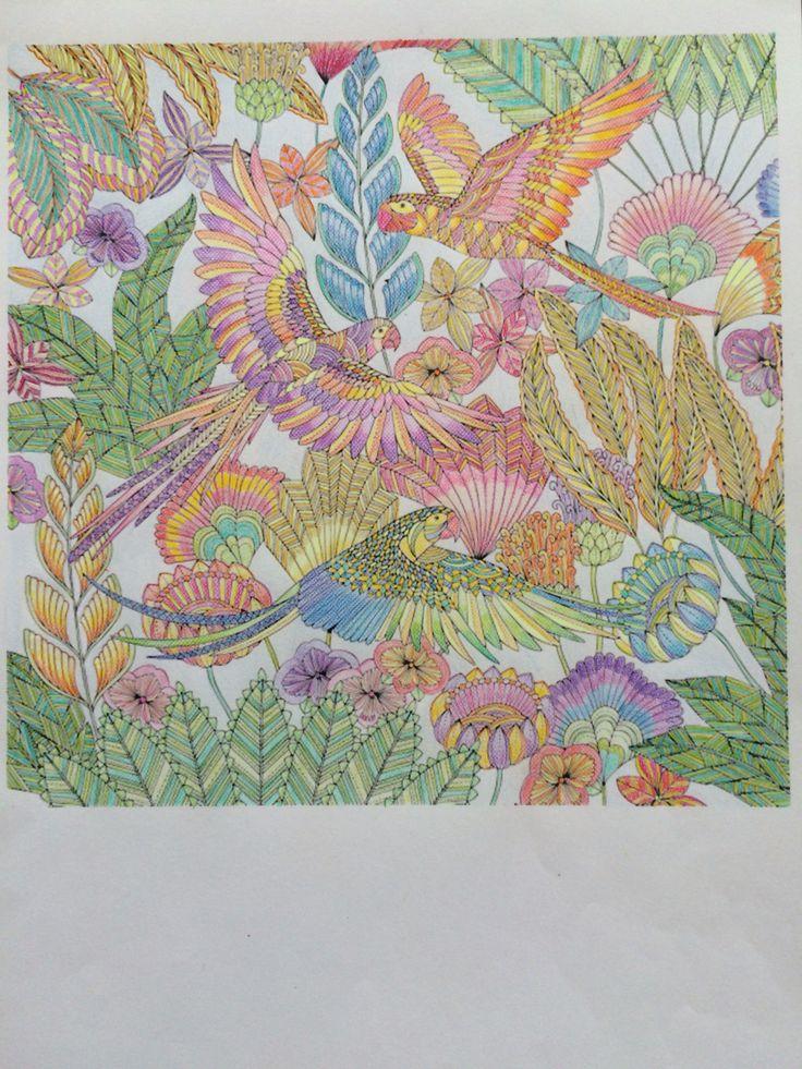 Millie Marotta - parrots - Tropical Wonderland