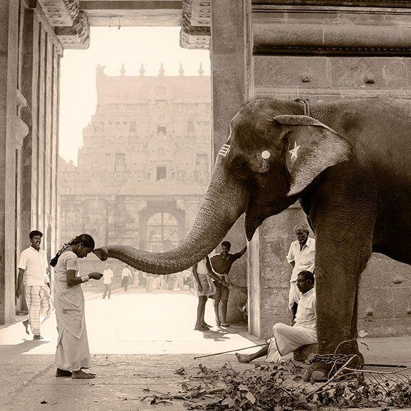 En image - 16 éléphants majestueux repérés sur Pinterest
