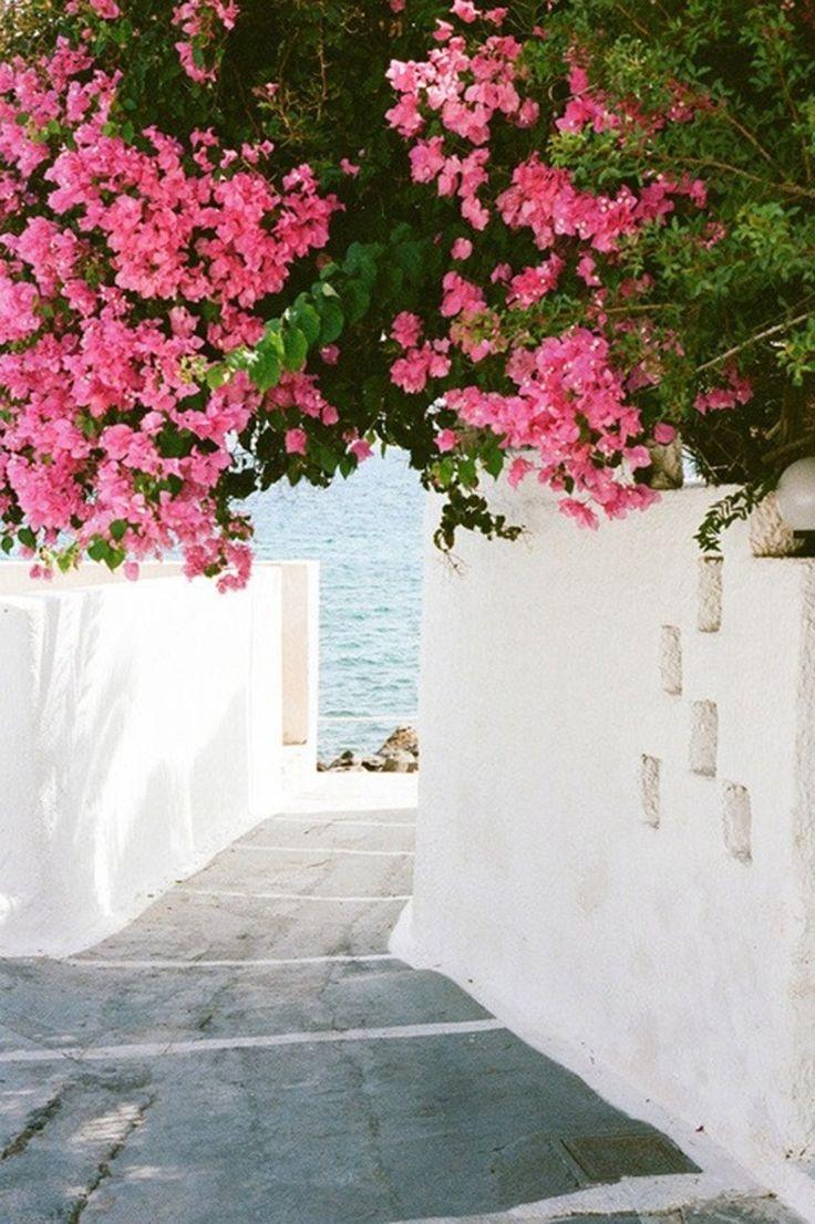 Mykonos Greece #greece #mykonos #pinkflowers