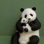 Panda    a big panda and a little panda