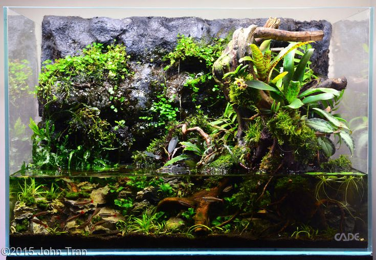 2015 AGA Aquascaping Contest - Entry #539