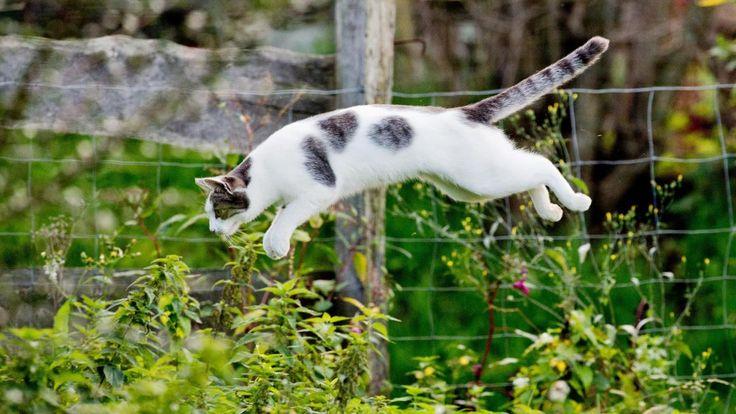 Katze-auf-Jagd.jpg (1200×675)