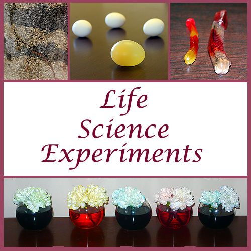 Life Science Experiments For Kids