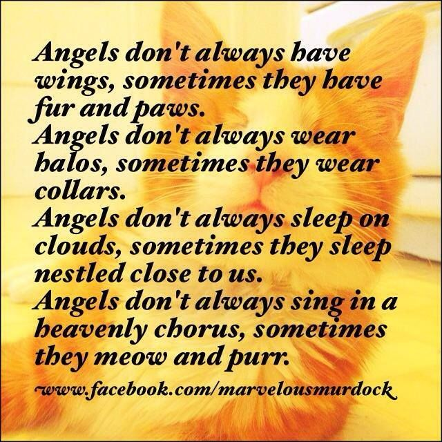 Dog Angel Quotes: 435 Best In Memory Of Gizzy And Beau Images On Pinterest