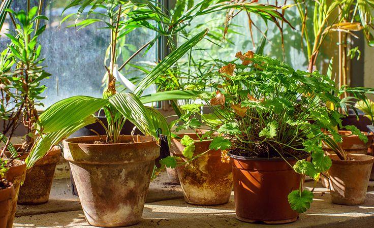 Du vet väl att det finns helt naturliga luftrenare i form av växter? Perfekt att ha hemma då de både är dekorativa och rensar luften från kemikalier som kan utsöndras från möbler, målarfärg...
