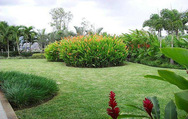 M s de 1000 im genes sobre flowers gardens en pinterest - Diseno de paisajes y jardines ...