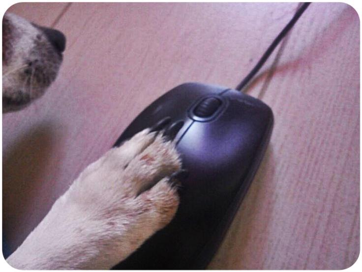 AL CANCORSO 2013 UN'ONDATA DI ISCRIZIONI!  www.cancorso.it, cane,cani, conscorso, cancorso, ilcancorso, ilmessaggero, quotidiano, animali, storie, coppie, cancoppie, canstorie, contest, dog, click, mouse