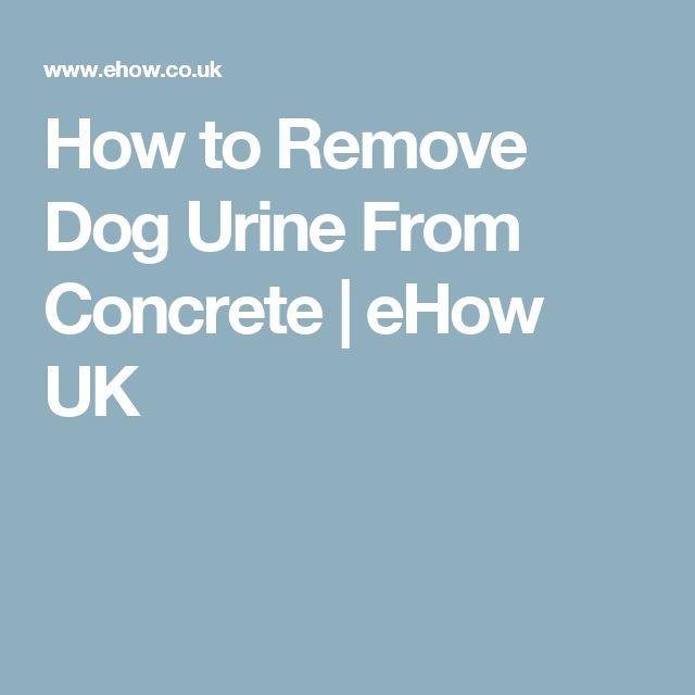 1000 Ideas About Dog Urine On Pinterest Urine Odor Pet