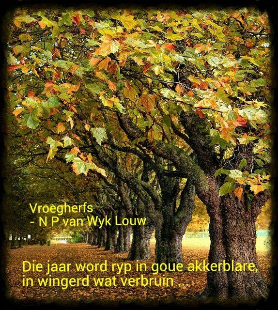 NP van Wyk Louw: Vier Gebede by Jaargetye in die Boland. Vroegherfs. Die jaar word ryp in goue akkerblare, in wingerd wat verbruin, en witter lug wat daglank van die nuwe wind en klare son deurspoel word; elke blom word vrug, tot selfs die traagstes; en die eerste blare val so stilweg in die rook-vaal bos en laan ...   (photo by Asim Schahzad)