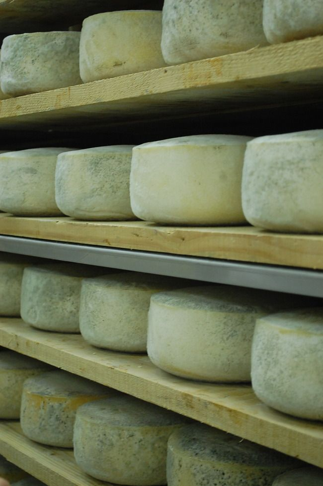 Pag is home to Paski Sir, some of the world's best cheese.   | Sirana Gligora, Pag, Croatia