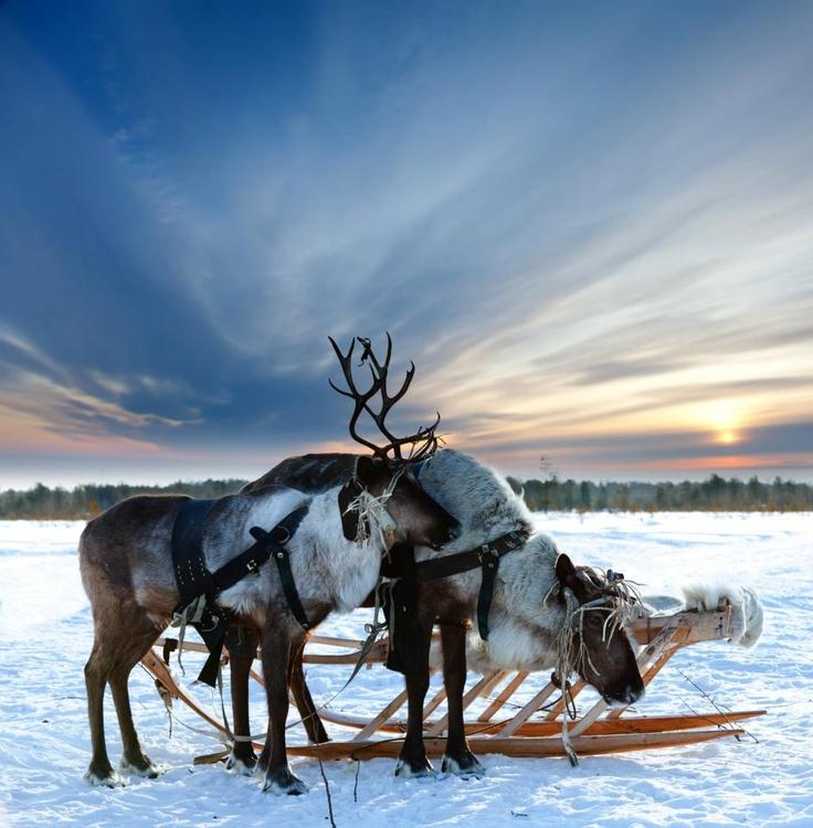La Laponie : Contrées enneigées et Noël féérique