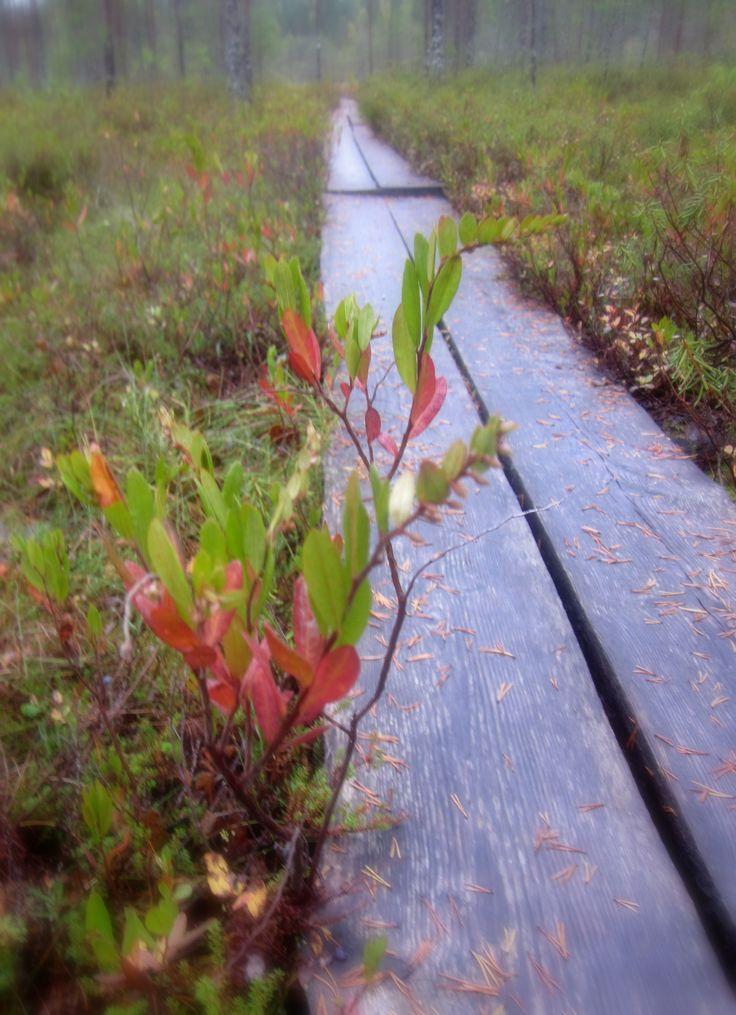Colorful autumn at Salamajärvi National Park. #salamajärvi #nationalpark #kivijaervi #centralfinland #hiking #autumn
