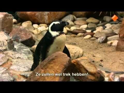 www kinderfilmpjes net, Freek in het Wild, Pinguins - YouTube