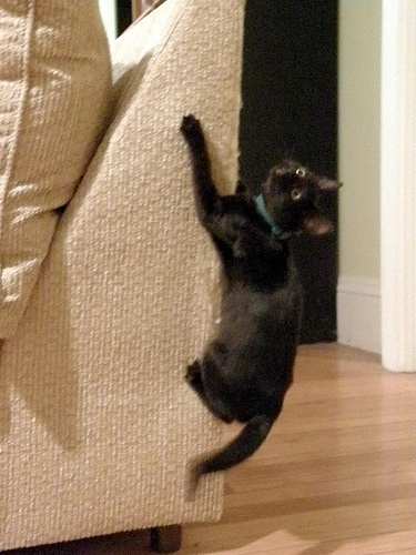 Marvelous How To Stop A Cat From Clawing Furniture In 11 Steps