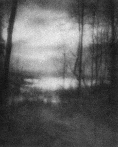 Imogen Cunningham, Marsh at Dawn, 1905-1906  #photography #blackandwhite #flowers