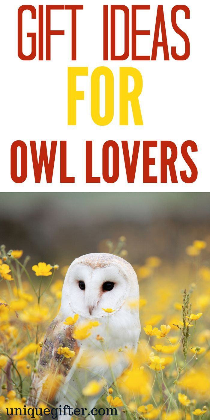 Gift Ideas for Owl Lovers | Owl Clothing | Owl Jewelry | Owl Gifts for Teachers | Owl  Gifts for Kids | Owl Gift Baskets | Owl Christmas Presents | Owl's Mother Day | Owl's Father's Day | Fun Owl Gifts | Awesome Gifts for Owl Lovers | Owl Books | Owl Prints | What to Buy for People Who Love Owls | The Best Owl Gifts | Gift Ideas | Gifts | Presents | Birthday | Christmas