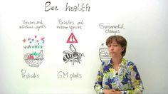 Salvemos a las abejas: La urgencia de ayudar a estos insectos