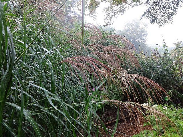 Les 87 meilleures images du tableau Arbustes du jardin sur Pinterest
