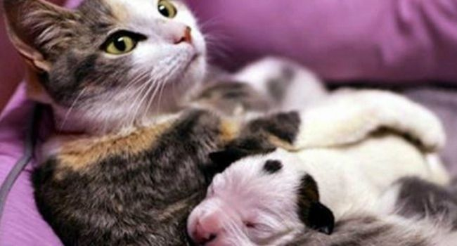 Mama Cat Nurses Pit Bull Puppy Back From Brink Of Death