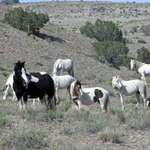 """Ride With The """"Wild"""" Horses... Check out this weeks fabulous blog!"""