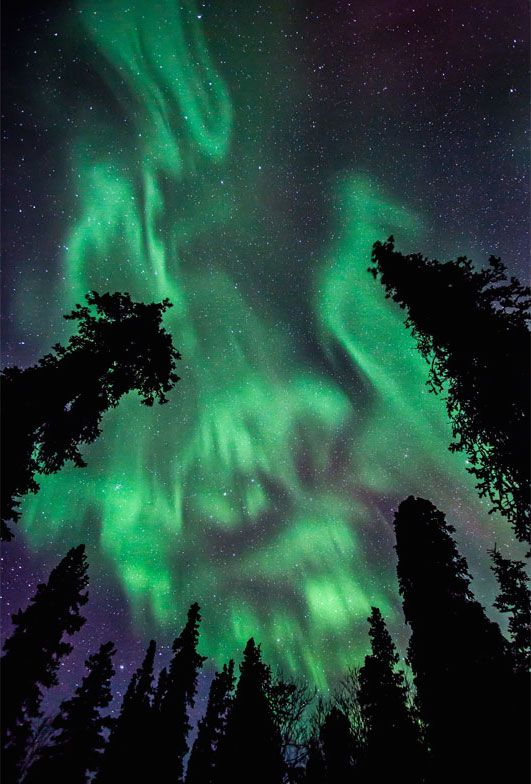 aurore-boreale-nuit-foret
