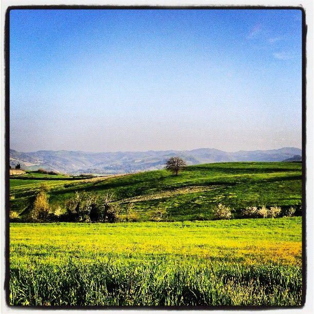 Tappeti verdi, lussureggiante splendore e solitudine #bagnolo #castrocaro #romagna - Instagram by elisamazzavillani