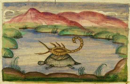 Tortoise and Scorpion - Favola della rana e dello scorpione - Wikipedia
