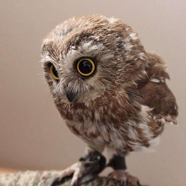 Por Gabriel Oliveira Para você que ama abiologia, nós do Instituto Aprenda.bio separamos 10 imagens mostrando os filhotes mais lindos que você conseguirá encontrar na natureza! Vamos lá: 1 - Filho...
