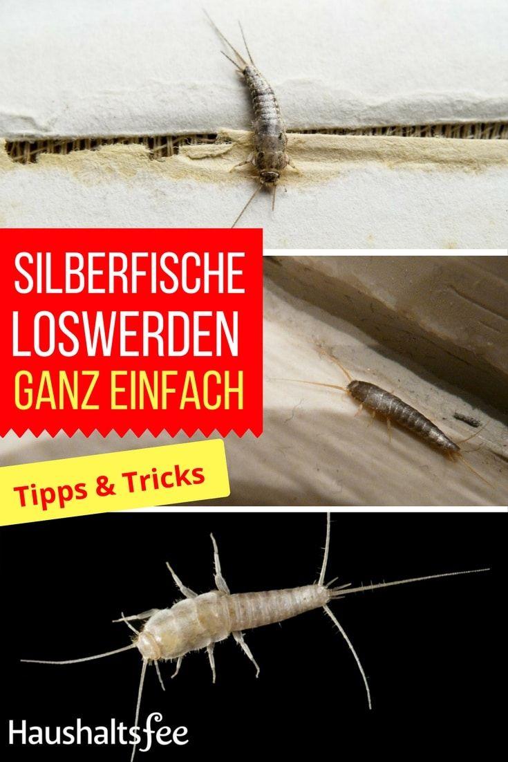 Silberfische Bekampfen Beste Tipps Tricks Silberfische Haushaltsfee Hausstaubmilben