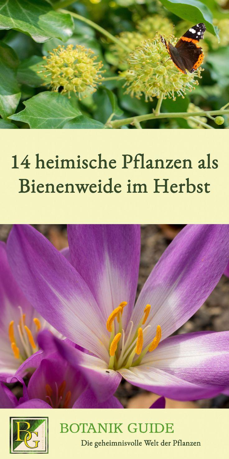 14 heimische Pflanzen als Bienenweide im Herbst