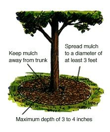 How to Mulch Flower Beds - Diagram