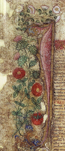 The Thistle and the Rose (detail) from the Treaty of Perpetual Peace (1502) between England and Scotland which was cemented by the marriage of James IV of Scotland to Princess Margaret, Henry VII's daughter. The borders of this document illustrate the thistle (James' emblem), the Tudor rose and the marguerete representing Margaret