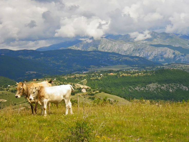 Real rural Montenegro. Head into the mountains of Montenegro to see the stunning scenery and local lifestyle.