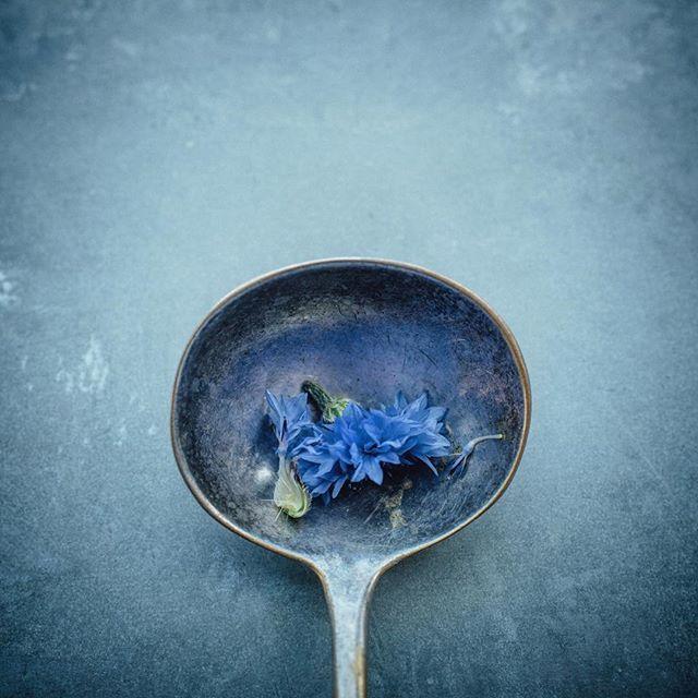 #blue #props #food photography #workinginfood #foodstyling #cornflowerblue #cornflower  #edible #foodphotography #foodphotographer #outtakes from @tom_kitchin #shoot #photofindr